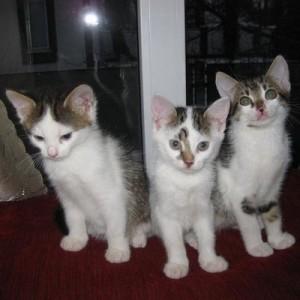 cats0008